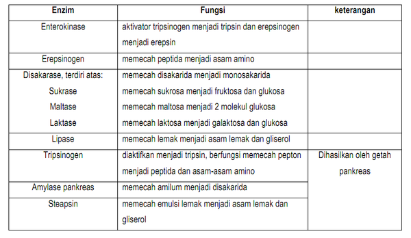 24+ Fungsi tripsin brainly information