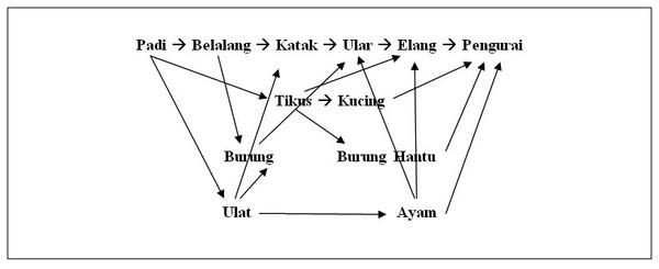 W1siZiIsIjIwMTUvMDQvMDYvMjMvNDQvMzYvMTUwL0xlc3Nvbl8yMFJhbnRhaV8yME1ha2FuYW4uanBnIl0sWyJwIiwidGh1bWIiLCI2MDB4XHUwMDNlIix7fV0sWyJwIiwiY29udmVydCIsIi1jb2xvcnNwYWNlIHNSR0IgLXN0cmlwIix7ImZvcm1hdCI6ImpwZyJ9XV0 Perbedaan Rantai, Jaring-Jaring, dan Piramida Makanan